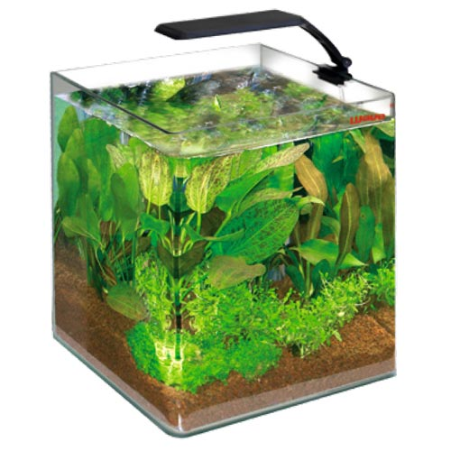 Wave Box Cubo 25 Orion Niedriger Preis Aquarien