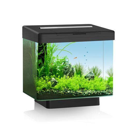Juwel Vio 40 Lifestyle Aquarium Schwarz 30l kaufen   Zoo Zajac