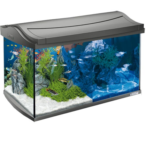 tetra mein aquarium mit der maus komplettset 60 liter aquarium set zoo zajac. Black Bedroom Furniture Sets. Home Design Ideas