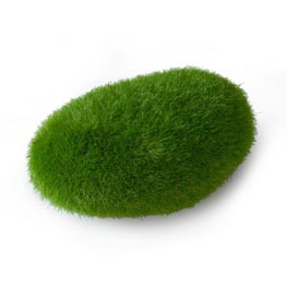 Aqua Della: Moss Ball medium  ca. 10x6,5x5 cm