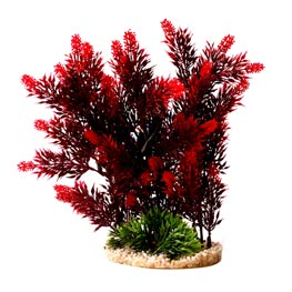 Sydeco: Hedge ca. 25 cm Rot